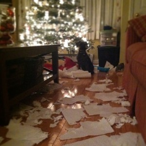 The paper towel debacle of '09