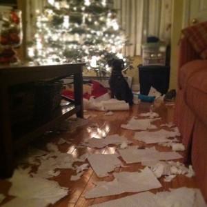 The paper towel debacle of '09